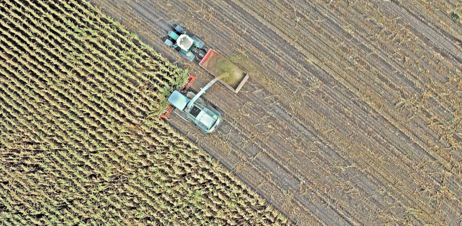 La Importancia Del Sector Agroalimentario En Galicia